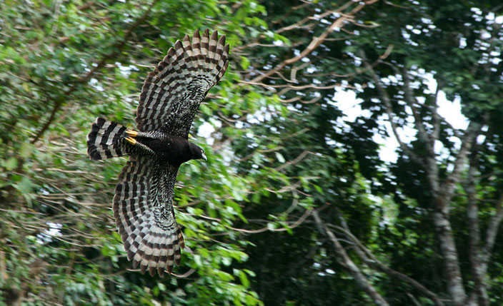 Paradise for bird-watchers - Travel to Iquitos
