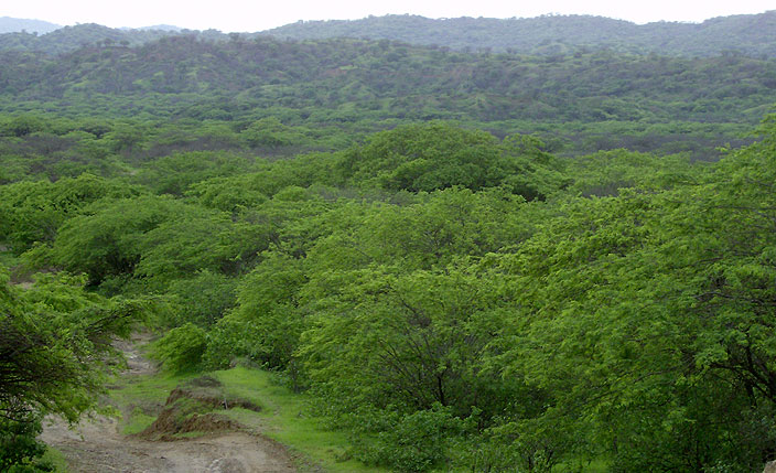 Protected Natural Areas in Tumbes